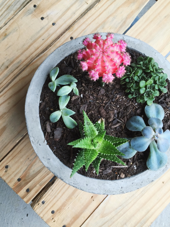 Make This Modern Concrete Planter for Just $1