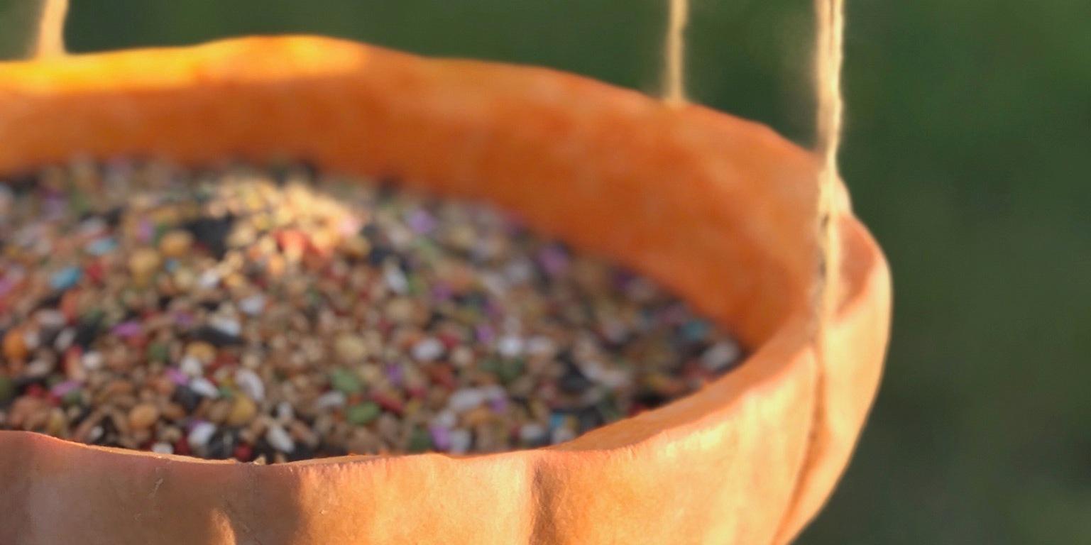 Easy pumpkin bird feeder solutioingenieria Image collections